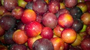 Зрелые плоды красного ткемали выглядят очень аппетитно.