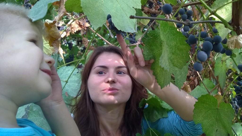 А виноград, хитрый, прятался.